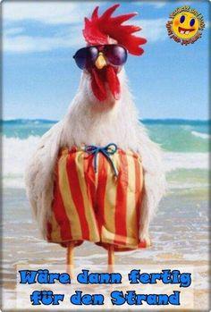 Funny happy birthday wishes animals Ideas Birthday Wishes Funny, Happy Birthday Quotes, Happy Birthday Greetings, Happy Birthday Chicken, Funny Happy Birthday Images, Birthday Humorous, Happy Tuesday Quotes, Birthday Sayings, Humor Birthday