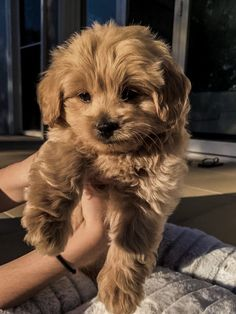 Super Cute Puppies, Cute Baby Dogs, Cute Little Puppies, Cute Dogs And Puppies, Cute Little Animals, Cute Funny Animals, Adorable Puppies, Doggies, Cute Fluffy Dogs