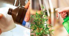 Metti 1 cucchiaio di acqua ossigenata alle tue piante e guarda cosa succede – cosedadonna.net