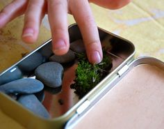 Make a nature study kit from recyclables