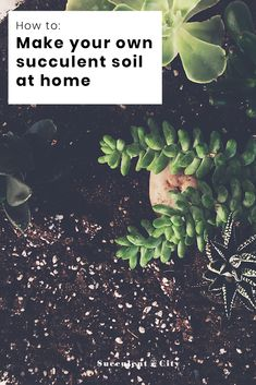 Succulents are super picky with their preference of soil they live in. Here's our fun step-by-step on how to make your own succulent soil at home! Succulent Potting Mix, Succulent Landscaping, Succulent Gardening, Succulent Terrarium, Garden Soil, Planting Succulents, Garden Care, Terrariums, Repotting Succulents