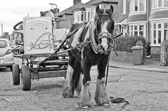 Rags and Bones Man, they are making a come back, minus the horse and cart now they drive around with megaphones in a pick up