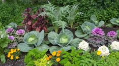 Glorious Enjoy Life With Your Own Flower Garden Beautiful Easy Ideas. Enjoy Life With Your Own Flower Garden Beautiful Easy Ideas. Vegetable Garden For Beginners, Gardening For Beginners, Garden Ideas 2018, Garden Tips, Good Neighbor, Garden Quotes, Companion Planting, Garden Planters, Organic Gardening