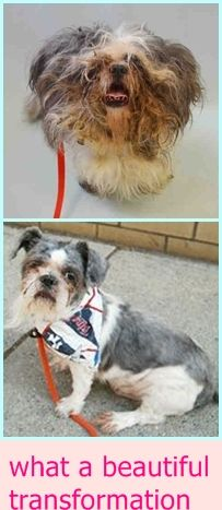 TO BE DESTROYED 06/27/16 **ADORABLE SENIOR NEEDS A NEW HOPE PARTNER AND A HOME TO GO TO!** Manhattan Center SCUTTLE – A1077832 MALE, BLACK / WHITE, SHIH TZU, 10 yrs STRAY – HOLD Reason OWNER DIED Scuttle's a shyer, quieter dog who's really feeling the loss.... http://nycdogs.urgentpodr.org/2016/06/scuttle-a1077832/