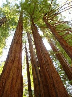 The coastal redwood forest of Muir Woods in Marin County, California will leave you speechless. The serenity and tranquility surrounding these giant trees is amazing...
