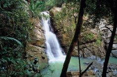 La Mina Falls in El Yunique rainforest, Puerto Rico  Beautiful. Apparently you can swim there.