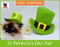 Crafts4Cats makes this meowingly  cute top hat for St. Paddy's Day!