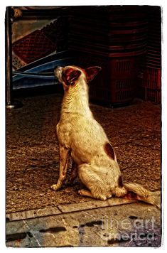 """""""His Master's Voice"""" by Mary Machare    A dog waits for his master at the edge of an ice cream shop at night in Seville, Spain."""