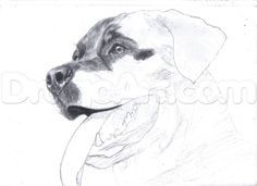 how to draw a realistic rottweiler step 11