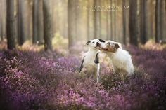 Não há quem não se apaixone por imagens de cães, ainda mais quando feitas por…