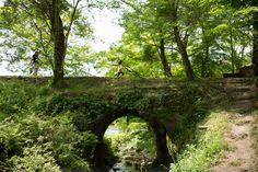 green arch bridge by Koji Kishita on Arch Bridge, Country Roads, Outdoor Structures, Garden, Plants, Photography, Garten, Photograph, Lawn And Garden