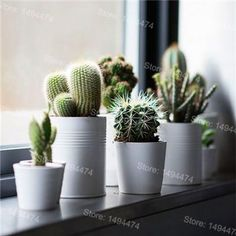 Windowsill decoration - 57 ideas how to discover the potential of the windowsill - window sill decoration cactus plants houseplants - Windowsill Decoration, Decoration Plante, Vases Decor, Indoor Garden, Indoor Plants, Home And Garden, Indoor Cactus, Potted Plants, Plants Are Friends