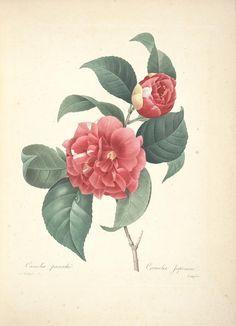 Pin De Lotusbluelight En Free Vintage Printables L 225 Minas