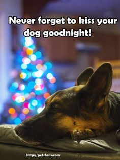 8 Ways to Pet-Proof Your Holiday Home I Love Dogs, Cute Dogs, German Shepherd Dogs, German Shepherds, Shepherd Puppies, Dog Memes, Dog Quotes, Dog Pictures, Animal Pictures
