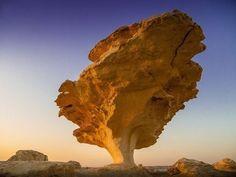 a rock tree