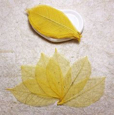100Yellow Skeleton Leaves Rubber Tree Natural Scrapbooking Craft DIY CARD Wedding -- Click on the image for additional details.