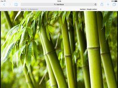 Ik ga bamboe op de achtergrond en dit is hoe ik het wil hebben
