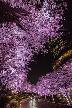 a-kichi: 摩天楼の桜河 Tokyo,Japan