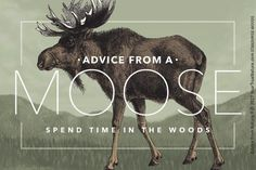 Advice from a Moose - Designer Sticker Gifts For Nature Lovers, True Nature, Moose Art, Stickers, Wood, Prints, Fun, Animals, Design