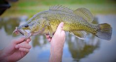 Guys from New England Explorer in northern New South Wales (Australia) catching Murray Cod!