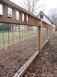 Fence Idea - cattle panels with standard 2x4 tops.  All cheap supplies from Tractor Supply Company.