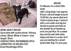 VIRGINIA ~ URG'T ~ meet Mouse ~ an #adoptable #Dachshund #Terrier blend in Lexington. I'm a short little dude with a long body approx 6-8y/o & about 15-20bs. My owner died & now Im at the shelter & need a 2nd chance in a loving fur-ever home <3 Im H-trained & mellow ~ C'mon & #adopt me ! I'm at The ROCKBRIDGE SPCA & you can call them at ph 540-463-5123 --pin 1.8.13