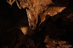 """Stalactite (Greek: σταλάσσω, stalasso, meaning """"the drip"""") is a type of speleothem (secondary mineral) that hangs from the ceiling of the limestone caves. It's included in the type of rock drops (d..."""