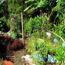 ¿Por qué incluir plantas perennes en la huerta ecológica? ecoagricultor.com