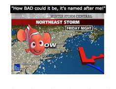 What's In A Name? When Nemo The Fish Became A Storm  ... from PetsLady.com ... The FUN site for Animal Lovers