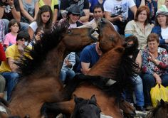 Wild horses fight during the Rapa das Bestas on July 7, 2012 in Sabucedo, Spain. (Denis Doyle/Getty Images)