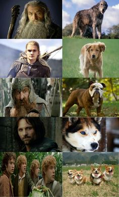 LOTR characters and their Canine counterparts