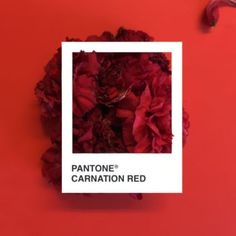 Pantone Swatches, Color Swatches, Paleta Pantone, Pantone Colour Palettes, Pantone Colours, Tape Art, Colour Pallete, Red Aesthetic, Shades Of Red