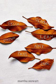 For hosting holiday dinners, help people to their seats with these embroidered cards. Write each guest's name (in simple block letters) on a batch of sturdy leaves (magnolias are best) in gold marker and back-stitch. A tip: Let the leaves dry for a few days so they get crisp. #marthastewart #crafts #diyideas #easycrafts #tutorials #hobby Leaf Crafts, Fall Crafts, Arts And Crafts, Diy Crafts, Rope Crafts, Decor Crafts, Nature Paper, Nature Crafts, Embroidered Leaves
