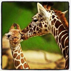 Big Kiss!