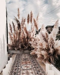 DIY - wedding decoration with pampas grass! Outside area with pampas grass - Grass Decor, Pampas Grass, Diy Décoration, Diy Wedding Decorations, Modern Rustic, Dried Flowers, Backdrops, Instagram, Home Decor