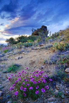 High Desert, Albuquerque, New Mexico