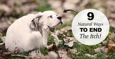 natural solutions for an itchy dog