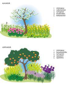 Suunnittele puutarha vanhanajan maatiaiskasveilla - Design your garden with hardy cottage plants www.viherpiha.fi