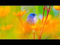 "Beautiful Relaxing Hymns, Peaceful Instrumental Music, ""Wednesday Morning Sunrise"" By Tim Janis - YouTube Instrumental Music, Deep Relaxation, Morning Sunrise, Wednesday Morning, Relaxing Music, Music Instruments, Peace, Bird, Youtube"