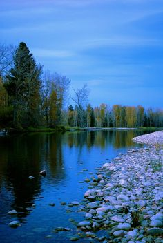 Forest in the river | Flickr - Photo Sharing!