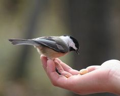 stick out your hand and feed a bird! We have so many varieties of birds, chickadees return year after year to the same nesting site.  Photography by © Michelle Anderson