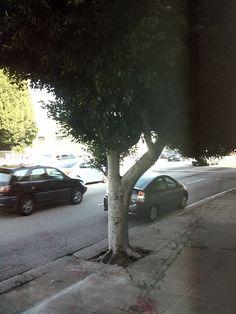 """View from the exhibition """"Sam Durant Laissez faire et laissez passer, le monde va de lui meme."""", Blum And Poe Gallery, Los Angeles, USA, 2011 Poe, Exhibition, Great Artists, Sidewalk, Side Walkway, Walkway, Walkways, Pavement"""