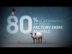 Fix Food - Fix Antibiotics - Meat Without Drugs-or just farm fish sustainably with aquaponics. Tyson Foods, Factory Farming, Food System, Going Vegan, Vulnerability, Farm Animals, Agriculture, Drugs, At Least