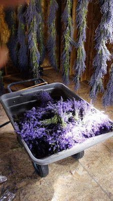 The Lavender Apple: Lavender Cottage Lavender Cottage, Lavender Garden, French Lavender, Lavender Blue, Lavender Fields, Lavender Flowers, Lavander, Provence, Apple Farm