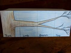 Limb Branch and Twig Foldable