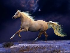 Night run - field, palomino, blue sky, gallop, wild, horse, free, night