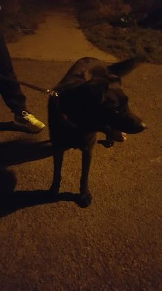 Dog found at the entrance of Saran Wood, Bray, Ireland at 9pm on Saturday 18th February. Male, young and very friendly. Has a orange collar on but no tag. He is a small black lab cross, not sure if he's microchipped.