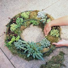 Craft your own succulent wreath to make a statement on your front door. All you need is a wreath form and a heap of small succulents. Cacti And Succulents, Planting Succulents, Cactus Plants, Succulent Gardening, Container Gardening, Air Plants, Indoor Plants, Sempervivum, Succulent Wreath