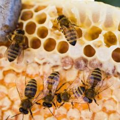 Top 8 Bee Pollen Benefits (No. 7 Is Remarkable) by @draxe