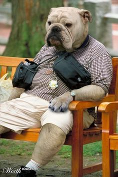 This is what you'll get when you cross a Bulldog with a.a Human .a Panda A Bull-Bull A Cat . Funny Animal Pictures, Cute Funny Animals, Cute Baby Animals, Animals And Pets, Pretty Animals, Funny Photos, Funny Dog Memes, Funny Dogs, Funny Bulldog